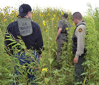 border patrol agents walking through a field of sunflowers