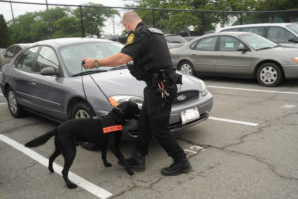 A cop lets a dog sniff for explosives around a car.