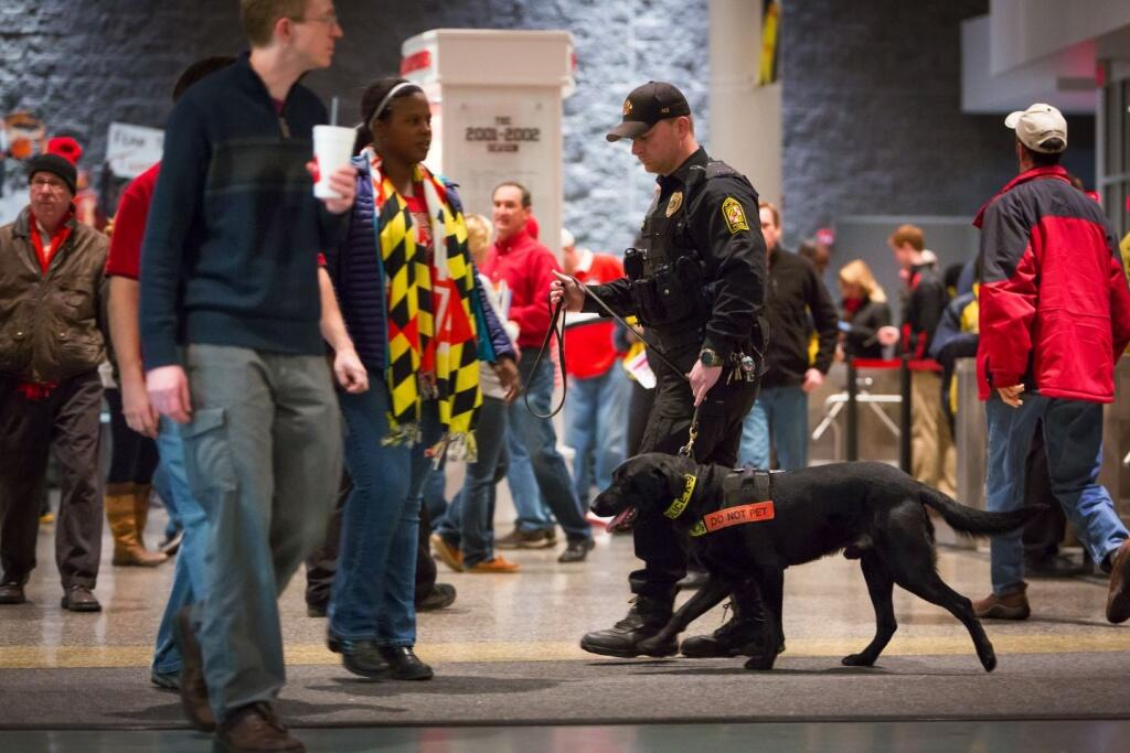 Detection Canine Team working the crowd at a basketball arena