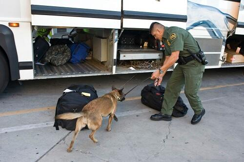 A border patrol agent has a CBP K9 sniff bags