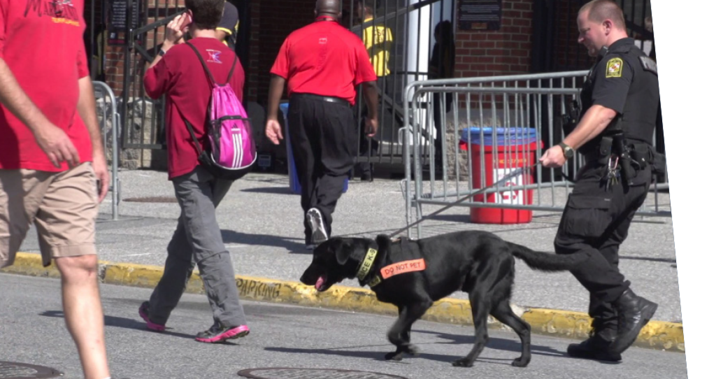 An explosives detection canine down working in public.