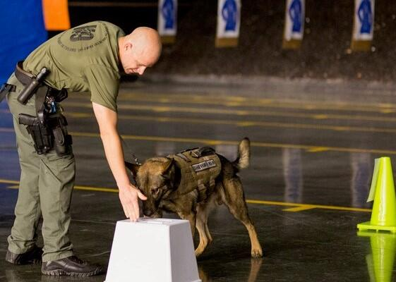A police officer trains his K9 on detecting explosives.