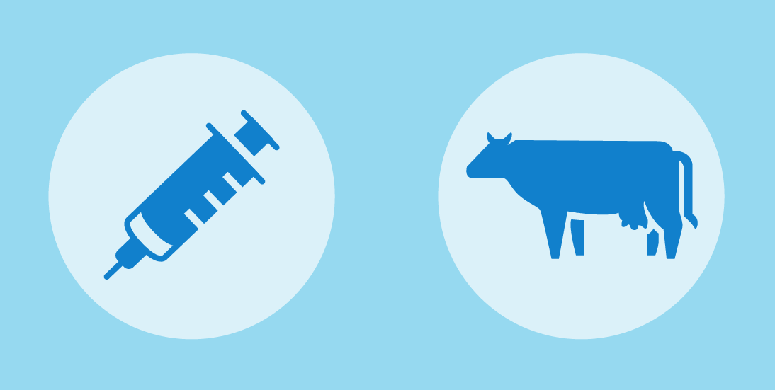 Foot-and-Mouth Disease (FMD) graphic. A needle and a cow.
