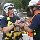 Members of FEMA's Urban Search and Rescue Nebraska Task Force One (NE-TF1) rescue a pet from floodwaters of Hurricane Harvey.