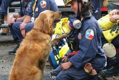 Bretagne the K9 canine search and rescue dog