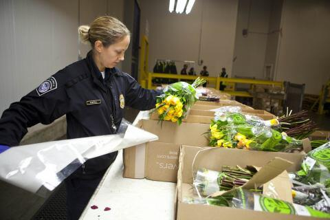 CBP Agent Inspects Flowers