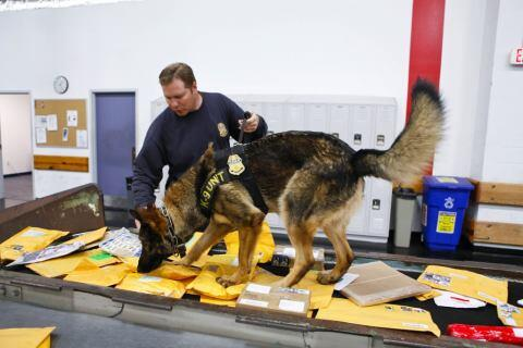 K9 Officer Checks Mail
