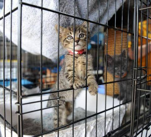 Cats displaced by the EF5 tornado were held at a temporary facility at the Cleveland County Fairgrounds.