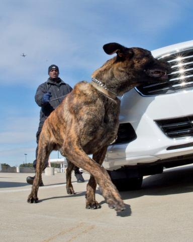 Canine inspecting a vehicle