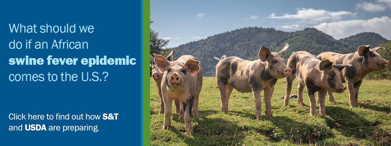 What should we do if an African swine fever epidemic comes to the U.S.? Click here to find out how S&T and USDA are preparing.